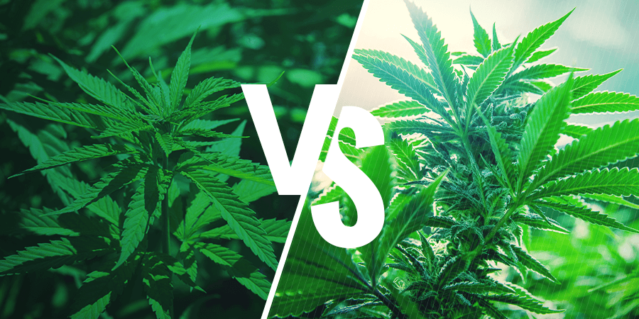 Sativa VS Indica HEADER CMS