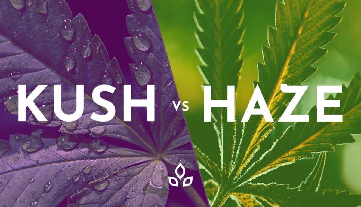 Kush_vs_Haze