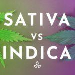 SATIVA - INDICA
