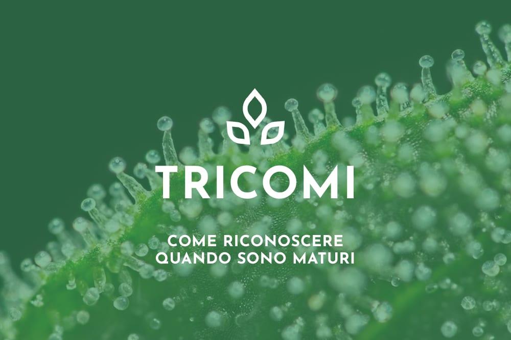 Tricomi