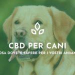 cbd-cani