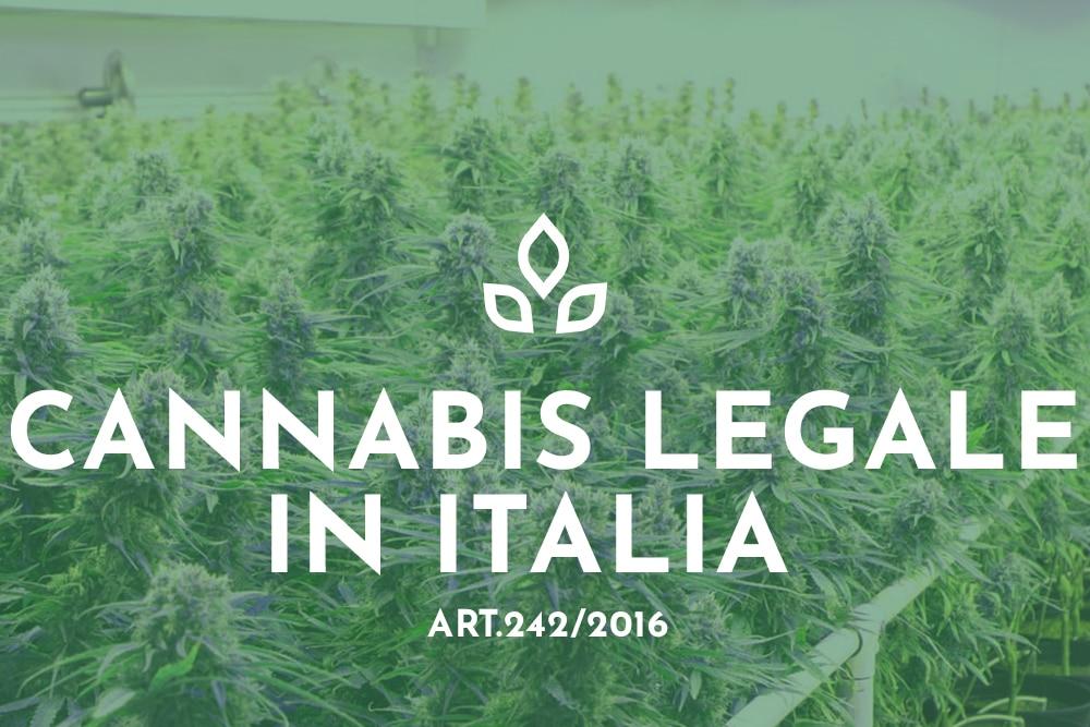 Cannabis Legale Italia